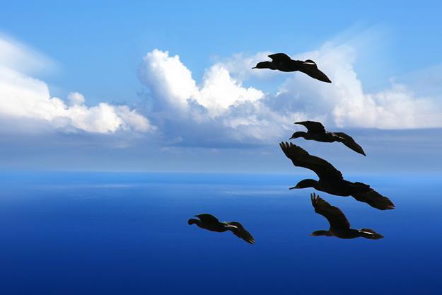 Wolkenlucht met vogels